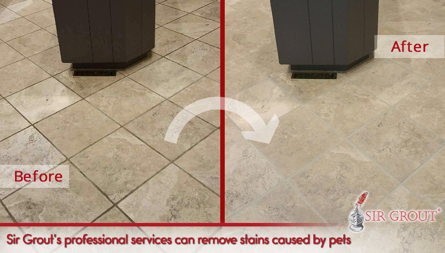 Sir Grout's professional service can remove stains caused by pets