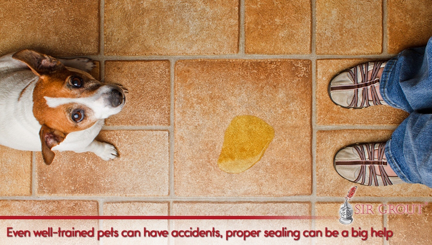Even well-trained pets can have accidents; proper sealing can be a big help