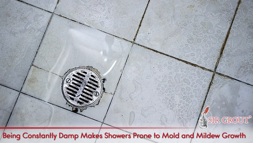 Being Constantly Damp Makes Showers Prone to Mold and Mildew Growth