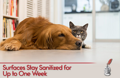 Picture of Dog and Cat on a Surface Treated with Sir Grout's Antimicrobial Cleaner