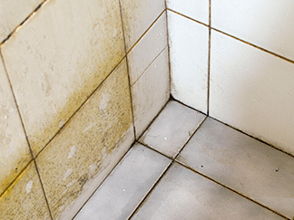 Grout in Damp Areas Is Susceptible to the Formation of Mold